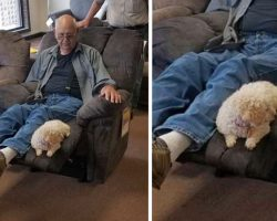 Grandpa Takes Dog To Furniture Store To Make Sure She Likes The Chair Too