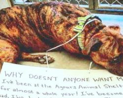 He Was Heartbroken As No One Ever Picked Him, So He Shut Down & Stopped Eating