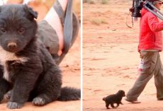 Hikers Find Hungry Puppy Dumped In Middle Of Desert, Puppy Was Living In A Tire