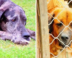 House Unanimously Passes Bill That Will Make Animal Cruelty A Federal Crime