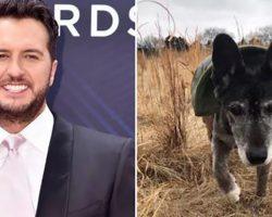 18-Year-Old Dog Left At Pound, Until Country Star Luke Bryan Adopts Him