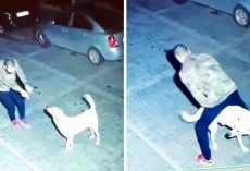 Man Having A Dance Party With A Stray Dog At Midnight Was Caught On Video