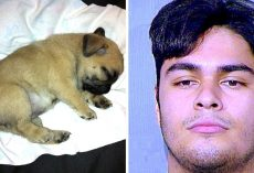 Teen Beats Up His Emotional Support Dog & Shows Off Pictures Of Abuse To His GF