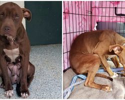 Shelter Dog Who Shook In Fear On Death Row Is Finally Heading To A Safe Place