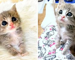 Orphan Kitten Is So Happy After Rescue, He Just Wants To Sit On Everyone's Laps