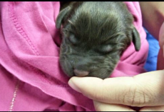 Owner Was Set On Putting Newborn Puppy Down But Vet Tech Wouldn't Allow It
