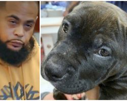 Man Cropped Puppies' Ears With Scissors And No Anesthetic To Save Breeder Money