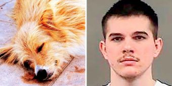 Man Stabs Dog 11 Times To Get His Revenge, Dumps The Dog's Body At Owner's Door
