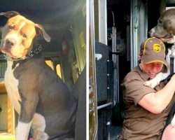 Pit Bull Cried Like A Baby After Mom's Death And Begs UPS Driver To Give Him A Home