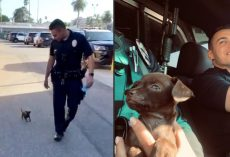 Officers Come Across Tiny Stray Puppy, Make Him Part Of The LAPD