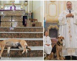 Priest Brings Stray Dogs Into His Church To Help Them Find Homes During Mass