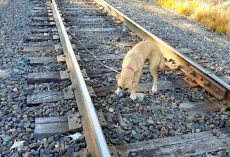 Puppy Tied To Railway Track And Left To Die, Cried At Passers-By For Help