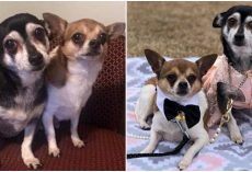 """Senior Dogs Left Homeless Were """"Inseparable"""" After Owner Died And Refused To Be Apart"""
