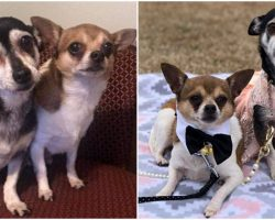 "Senior Dogs Left Homeless Were ""Inseparable"" After Owner Died And Refused To Be Apart"