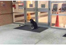 "Stray Dog ""Mysteriously"" Appeared At School Every Morning, So Teacher Got Involved"