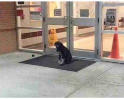 """Stray Dog """"Mysteriously"""" Appeared At School Every Morning, So The Teacher Got Involved"""