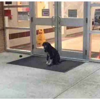 """Stray Dog """"Mysteriously"""" Appeared At School Every Morning, So Teacher Got Involved"""