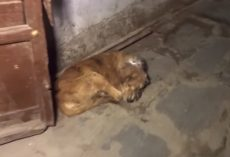 Rescuers Find Stray Hiding With A Powdered Wound On His Head