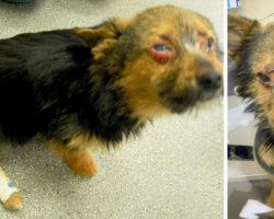 Teens Beat Tiny Dog & Fed Him Drugs, Then Set Him On Fire And Dumped Him In Trash
