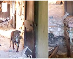 They Froze As Pit Threatened To Charge, Her Growls Later Justified 6 Times