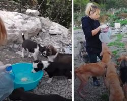 Girl Gave Everything Up To Help A Bunch Of Stray Dogs In Need