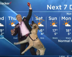 Weatherman Found Himself In A Pickle While Trying To Read The Local Forecast