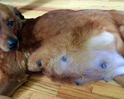 Woman Adopted Pregnant Dog Slated For Euthanasia And Her Dog's X-Ray Deceived Her
