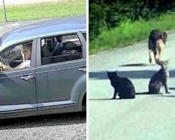 Woman Turned Away By Shelter Dumps 11 Pets In The Middle Of A Road & Drives Off