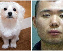 Man Kills Girlfriend's Senior Dog After She Said She Loved The Dog More Than Him