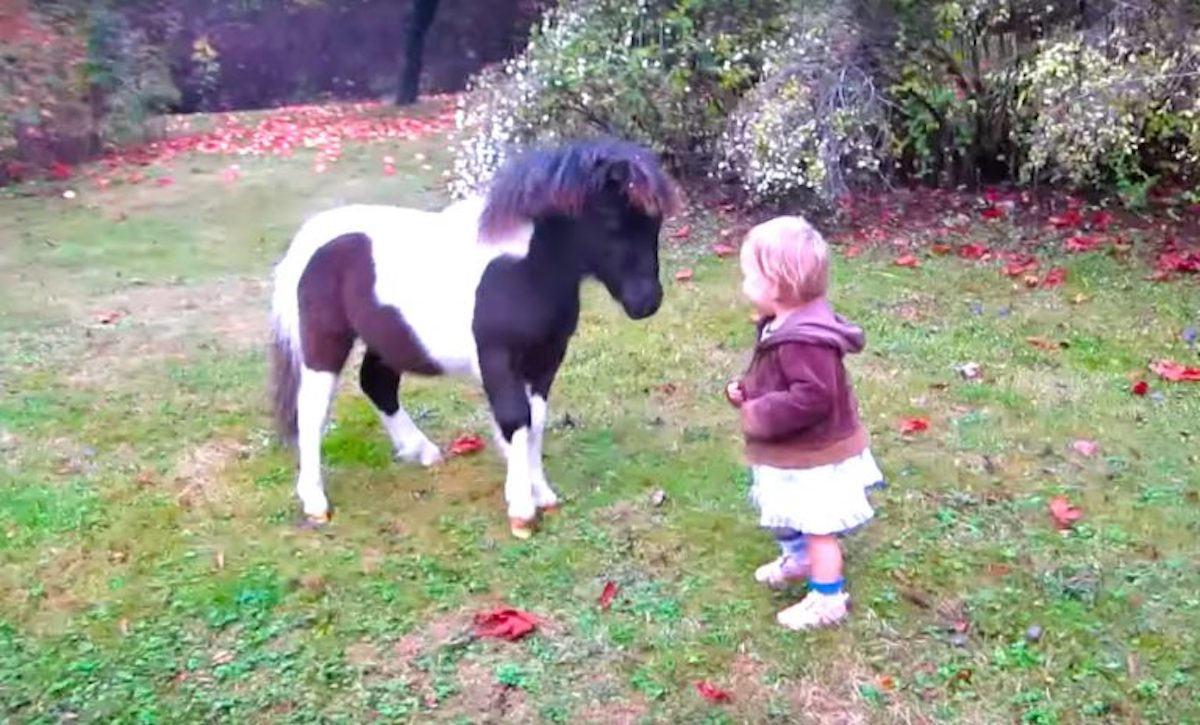 One Year Old Baby Running And Playing With Miniature Horse