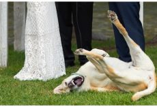 10 Dogs Who Probably Shouldn't Get An Invitation To Your Wedding