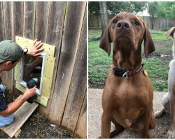 2 Neighbor Dogs Become Soulmates & Dad Installs Fence Door So They Can Be Together