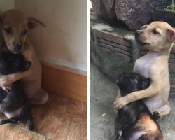 2 Stray Puppies Were Rescued, And They Refuse To Stop Hugging Each Other