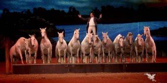 """Eyes In Air"": Breathtaking and Amazing Lorenzo International Horse Show"