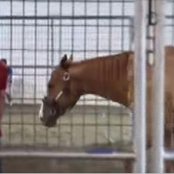 Horses find new life off the track healing veterans