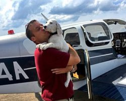 Army Veteran Flies Across America To Save More Than 700 Pets From Kill Shelters