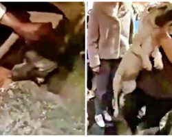 Angry Boutique Worker Hurls Defenseless Pup Across Room, Dog Lands On Head