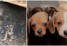 Hateful Human Locks Beagles In Shack In Ice-Cold Temps & Gets Away With It For Months