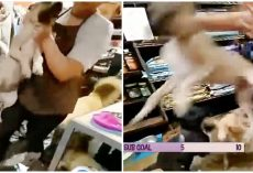 Employee Grabs Dog By Neck & Slams Him To Ground In Front Of Mortified Customers