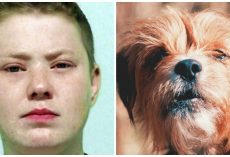 Outcry After Drunk Woman Punches Dog To Death But Manages To Avoid Jail Time