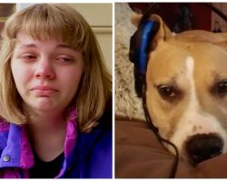 Dog-Mom Wants Answers After Cop Shoots Twice And Kills Her Pit Bull