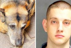 Cop Beats His Puppy With A Block Of Wood, Puppy Found Bleeding With Skin Tears