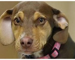Couple's Rescue Dog Was Acting Erratic And Leads Them To 3-Year-Old Girl Lying In A Ditch