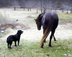 Horse And Dog Play Together