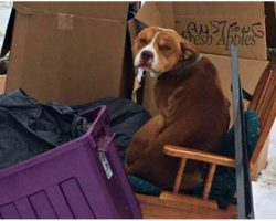 Dog Left Behind By Family Huddled In Trash Pile And Used Old Recliner For Warmth