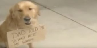 Dog Seen Outside Of Store With A Sign Around His Neck