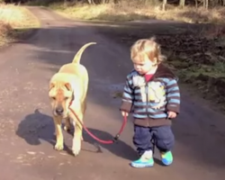 Boy Walking His Dog Share A Friendship Moment When They Find A Puddle