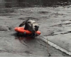 Donkey Breaks Into Large Smile After Being Saved From Deep Flood Waters