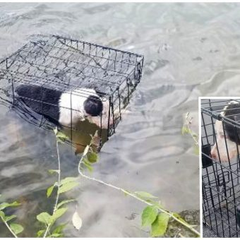 Sicko Tossed Pup's Crate Into Freezing Lake, She Shuddered As Her Body Sunk Deeper