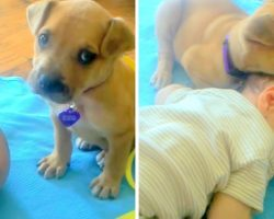 Dumped Puppy Doesn't Know How To Lie Down & Keeps Tumbling, Finds Comfort In Baby